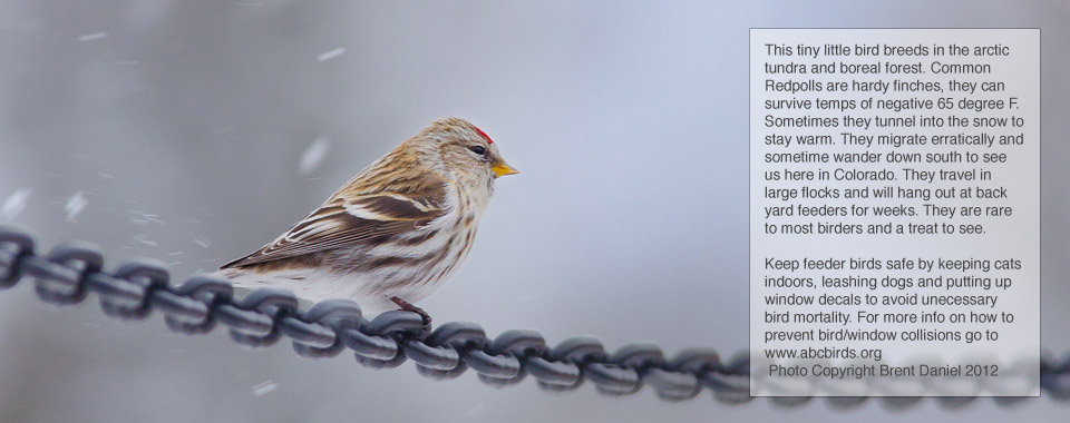Colorado Native Bird Care and Conservation - Home